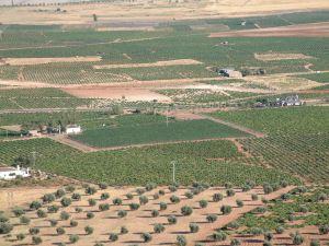 Campo de viñas en Villarubia de los Ojos (Ciudad Real)