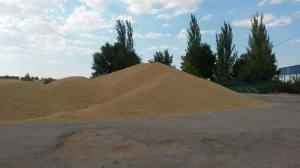 La cosecha del cereal llega a su fin