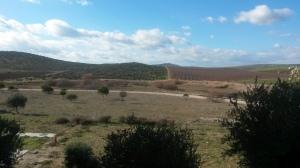 Paisaje en Mengibar (Jaén)