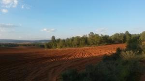Campos en Jábega (Cuenca)