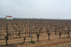 Viñedo en espaldera en Castilla-La Mancha