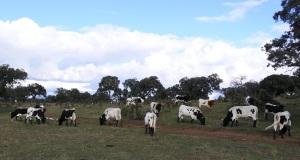 Berrendas en Almodovar del Campo (Ciudad Real)